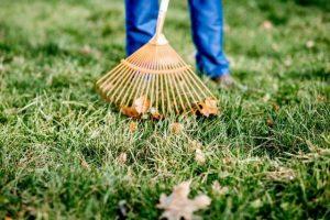 Prezzo manutenzione giardini Roma
